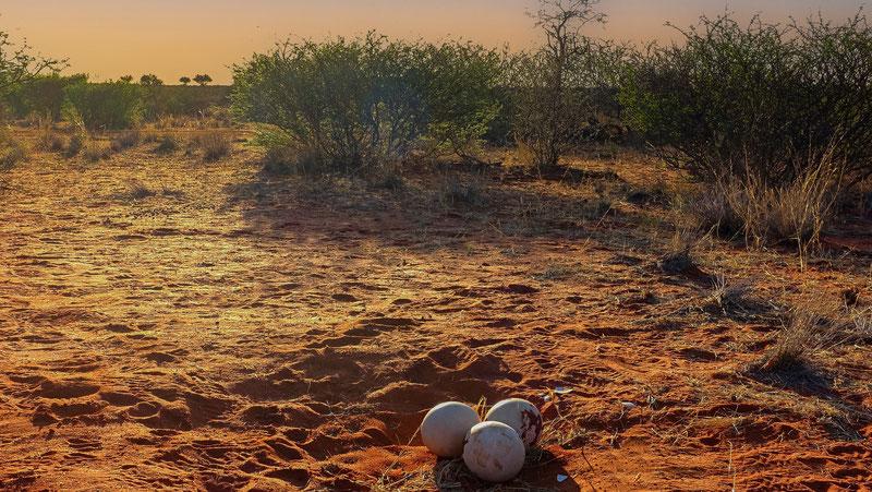 Désert du Kalahari, Namibie