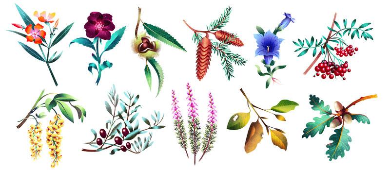 Barbara Petris Illustrazioni App Piante Locali