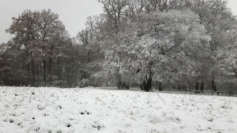 Schneelandschaft nahe der Jubiläumswarte im 16. Wiener Gemeindebezirk am 12.11.2016