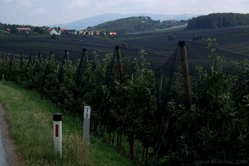 Obstkulturen mit Netzen zum Schutz vor Hagel im steirischen Apfelland 2008