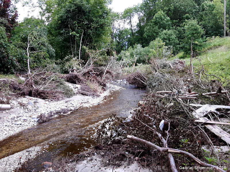 Von der Sturzflut niedergedrückte Bäume im Aichbach knapp vor dem Zusammenfluss mit dem Holzhamer Bach