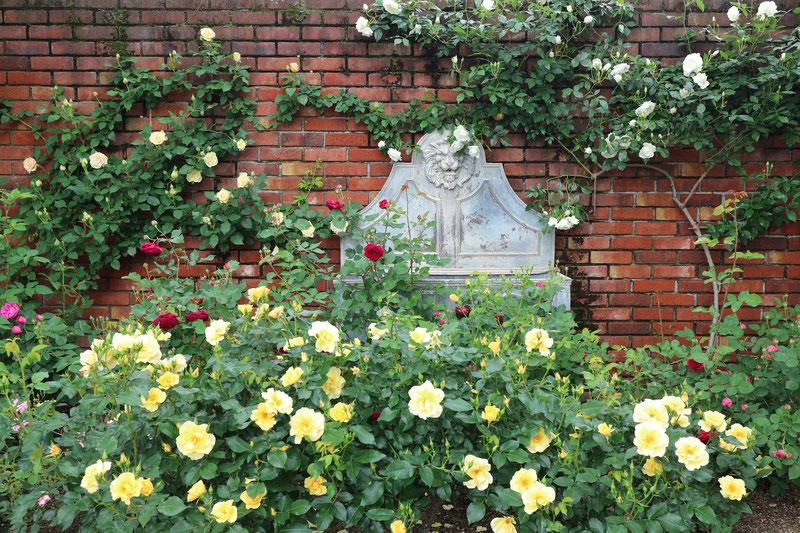 京都市下京区四条烏丸の心療内科、メンタルクリニック、バラの庭園、薔薇