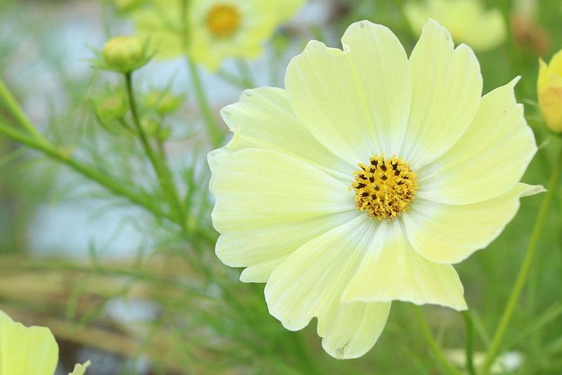 京都市下京区四条烏丸の心療内科、女医のいるメンタルクリニック、花