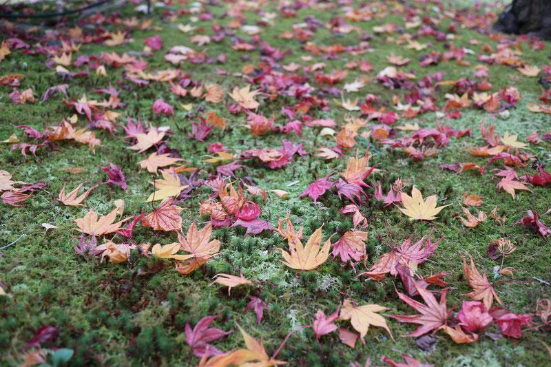 京都市下京区にある心療内科、女医のいるメンタルクリニック、緑の苔、色づいた紅葉、秋の風景