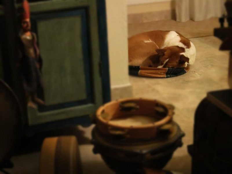 Maya descansando después de la grabación..