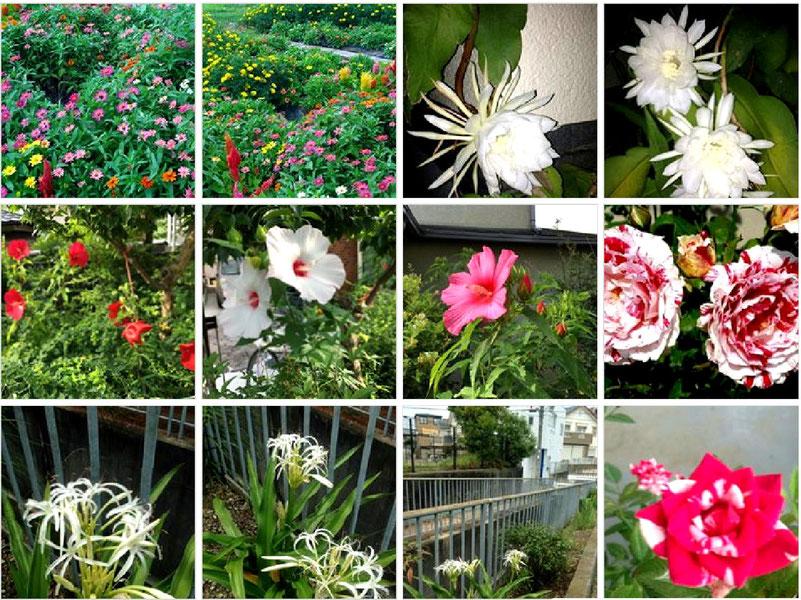 左上の2つは古井戸公園の再生花壇、右上2つは月下美人・・・