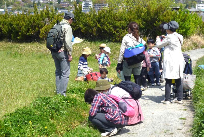 坊島(ぼうのしま)の田んぼでワイワイ-自然観察