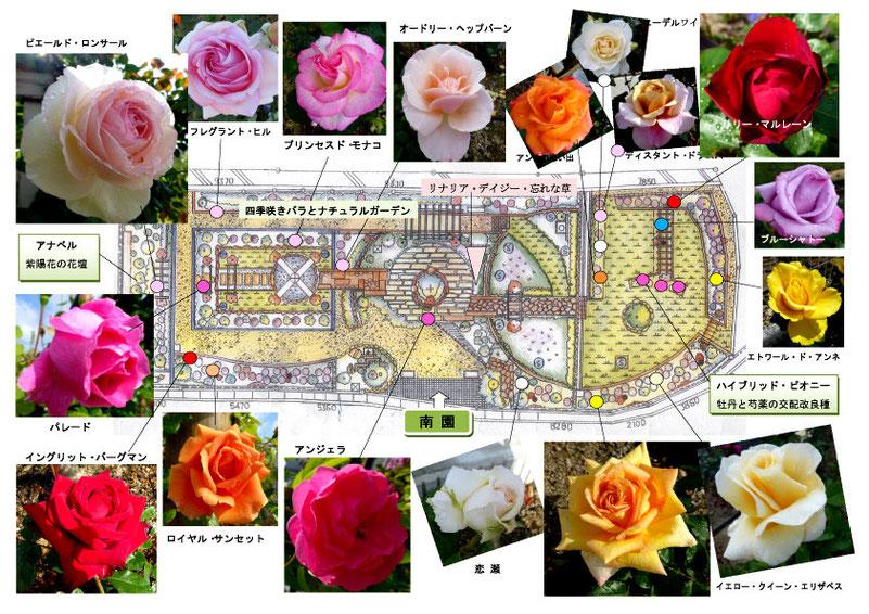 南園の主なバラたち。                                        共に、当日の配付資料:バラ園マップ。