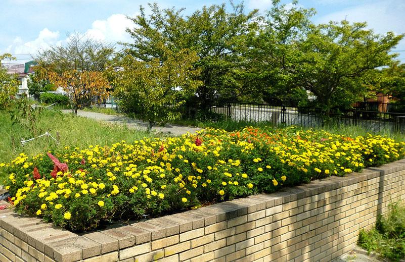 花盛りの夏花壇(間もなく冬花壇へ切り替え。候補地の1つ=「花咲か公園」で9/11撮影)