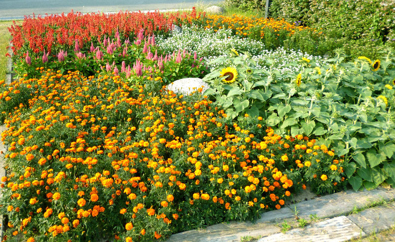 意識的な「デザイン花壇」(古井戸公園=箕面市かやの中央/市民組織「みのお園芸ファーム」が管理)