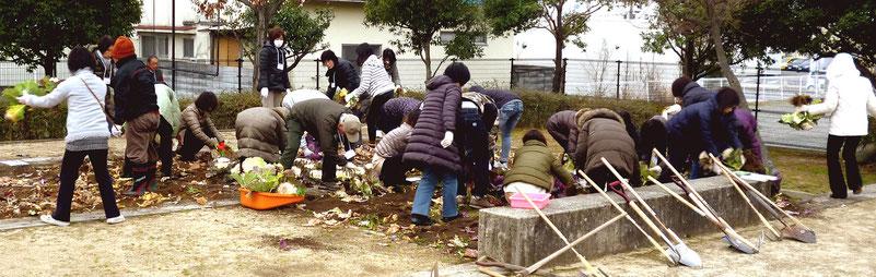 まずお正月からの葉ぼたんを撤去。取り除いた葉っぱは、囲いに積み上げ腐葉土に・・。