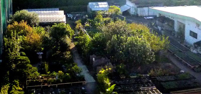 建物(右手)の裏に広がる苗床・ビニールハウス・樹木畑など