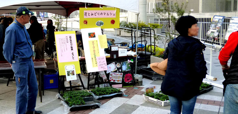 会場でのマリーゴールドの苗の配布風景/左端:グリーンアドバイザーの上尾さん(NPO花とみどり副代表)