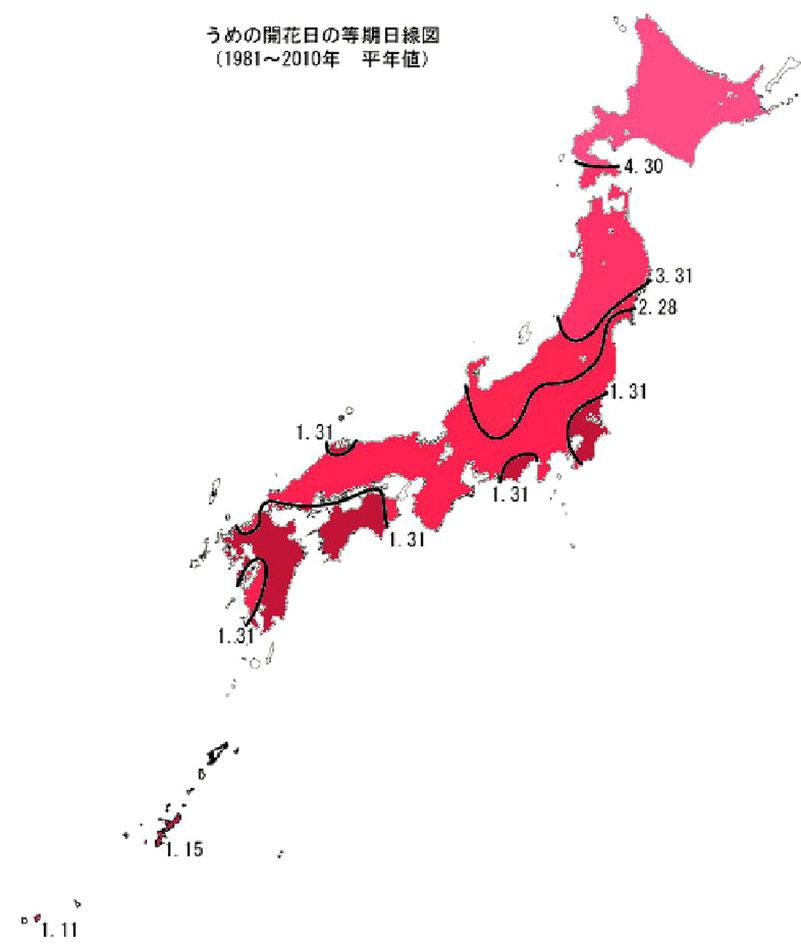 「梅」の開花前線(平年)。大阪は2月開花の範囲に。(気象庁)