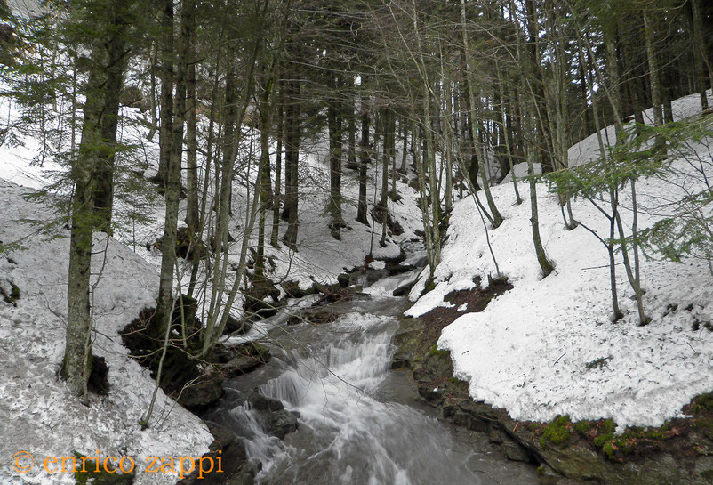 Campigna, il torrente che scende da Fosso Abetio