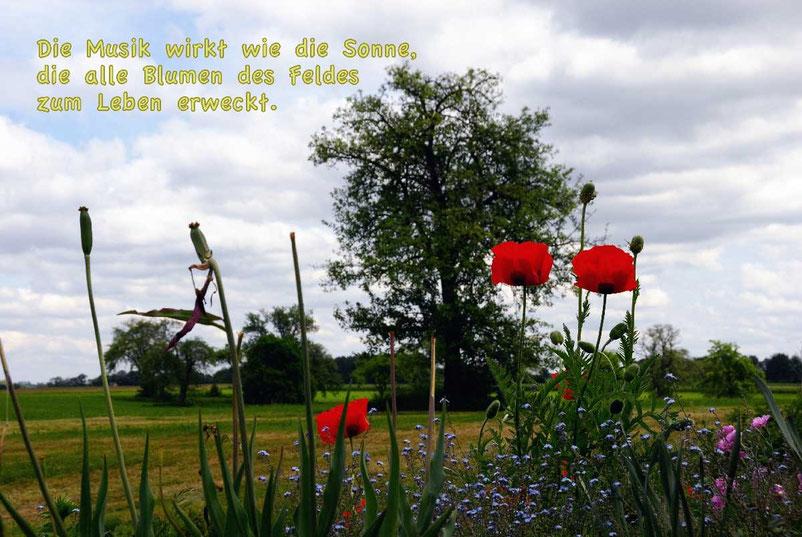 Die Musik wirkt wie die Sonne, die alle Blumen des Feldes zum Leben erweckt.
