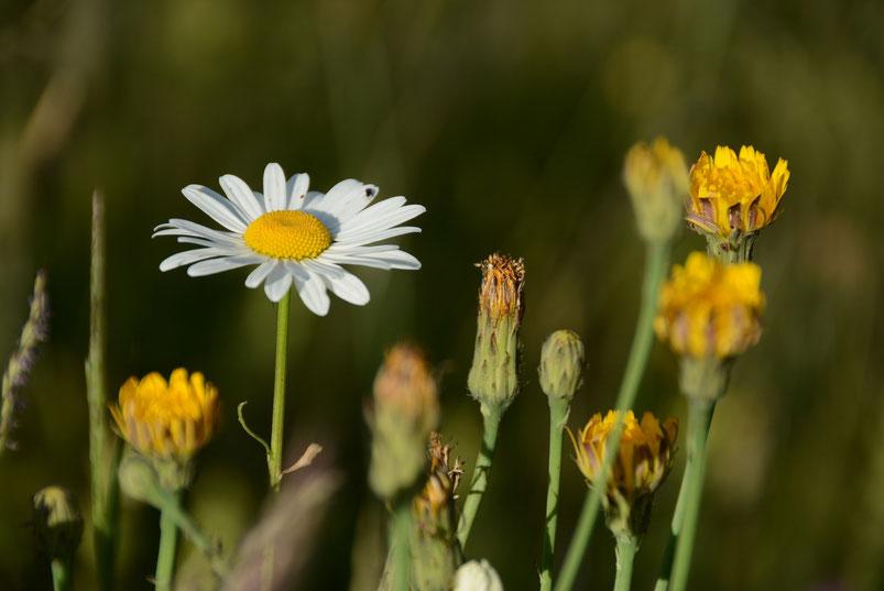 Wunderschön wie sie wieder blühen - noch mehr Bilder im Fotoalbum