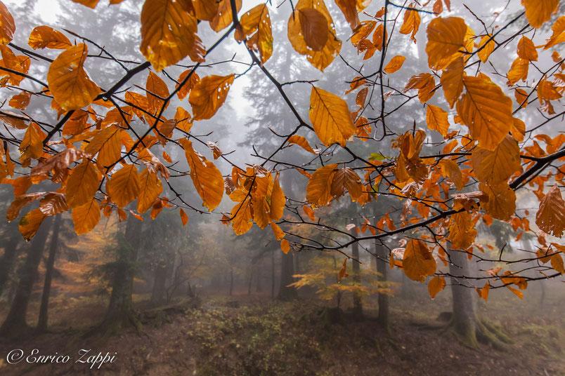 Camaldoli: il bosco in una giornata uggiosa d'autunno