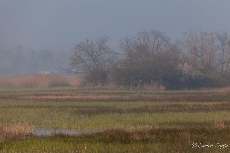 Bardello: Primi giorni di marzo, una leggera nebbiolina rende il panorama un pò evanescente.
