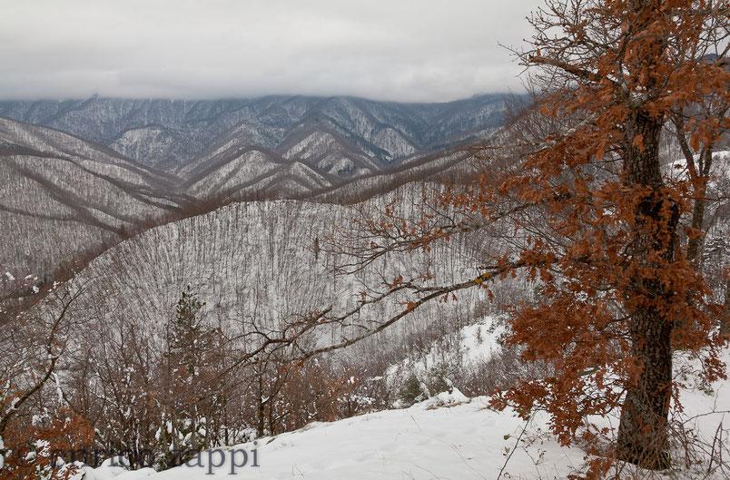 Inverno nel Parco Nazionale delle Foreste Casentinesi