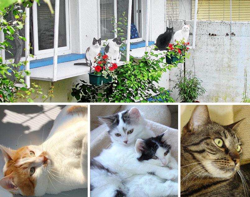 Katzenhotel Müsli - Ferienbetreuung für Ihre Hauskatze