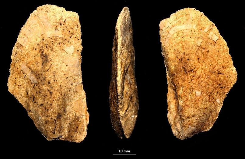 Modiolus cfr. barbatus, colline intorno a Tarquinia (VT)