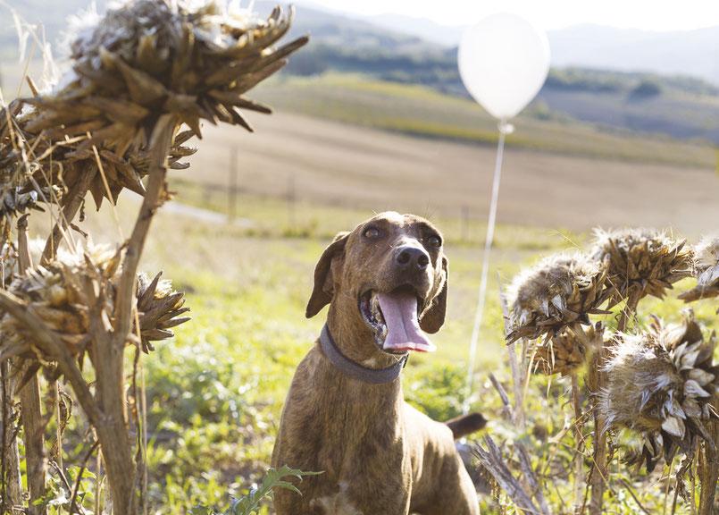 cane-canile-palloncino-bianco-prato-fiori-secchi