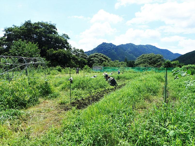 無農薬の野菜作り教室・農業体験「さとやま農学校」