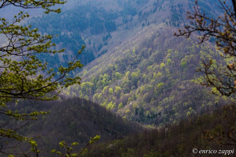 Parco Nazionale delle Foreste Casentinesi, dopo l'inverno il bosco, pian piano, si riveste del suo abito verde.