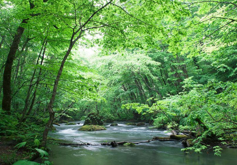 岐阜 山国 清流 長良川 緑豊か 自然 恵み 素材 木 森 林 川 揖斐川 木曽川 水
