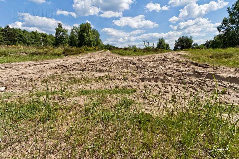 Insektenhotel Nisthilfe Insektennisthilfe Erdboden Bodennister