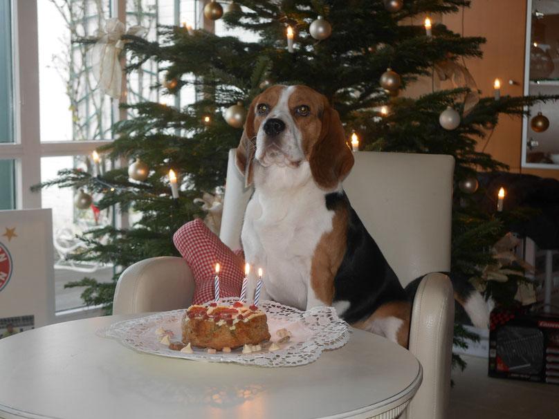 Little King Arthur Beagle Czarnowsky