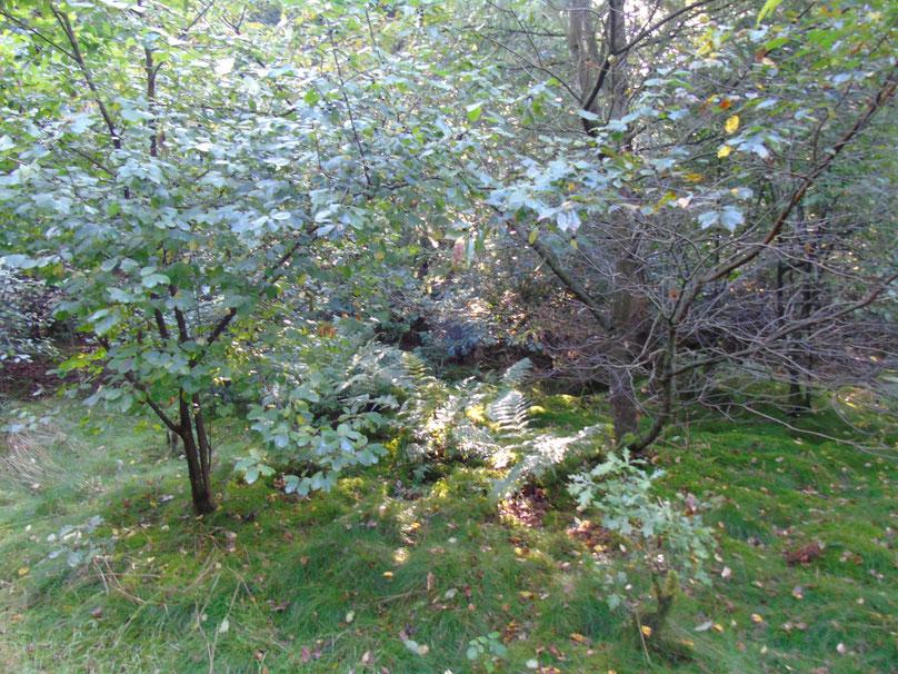 Lebenselixier Wald und Licht, Quelle: www.lichtwesenfotografie.com