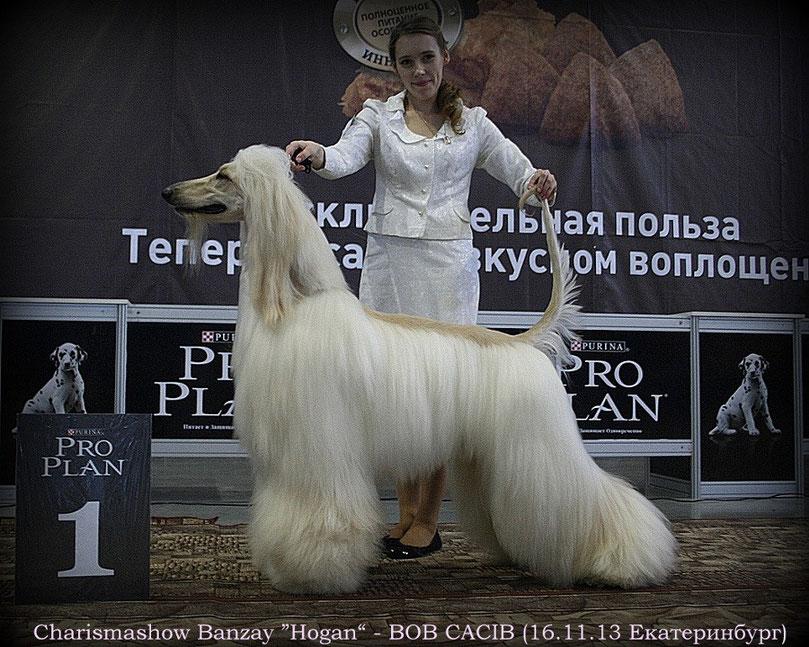 В питомнике родились щенки Хоган (вл. Мишенева М.) и Така