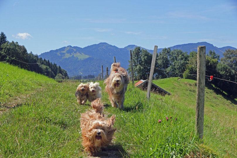 Hunde haben Spaß im Allgäu