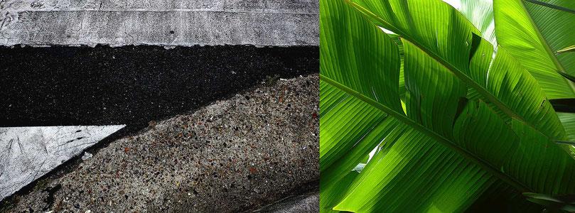 Mathieu Guillochon photographe, France, signes, rue, plante, palme, couleurs, empreintes