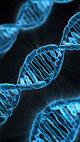 Bild einer Gen-Spirale als Sinnbild für die Gen-Therapie bei der Huntington-Krankheit