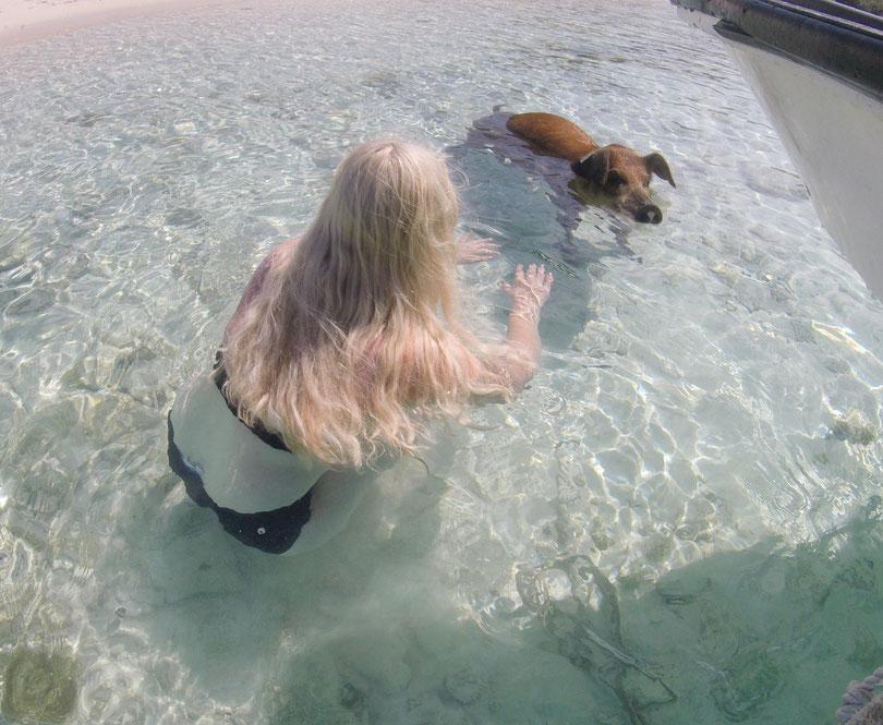 Auf den Bahamas mit Schweinen baden