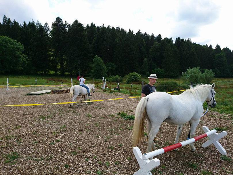 Tanja Equestre Groneberg