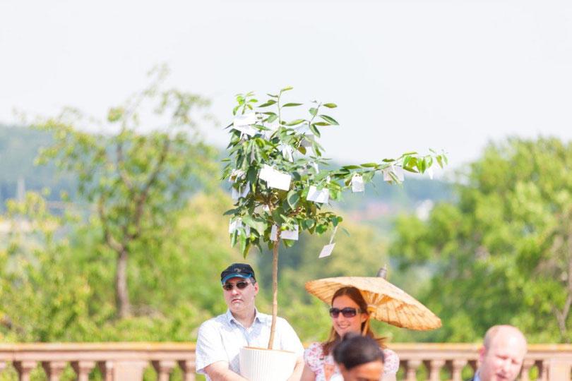 Hochzeitsbaum, Wunschbaum – freie Trauung mit alter Tradition ... mit Papilio
