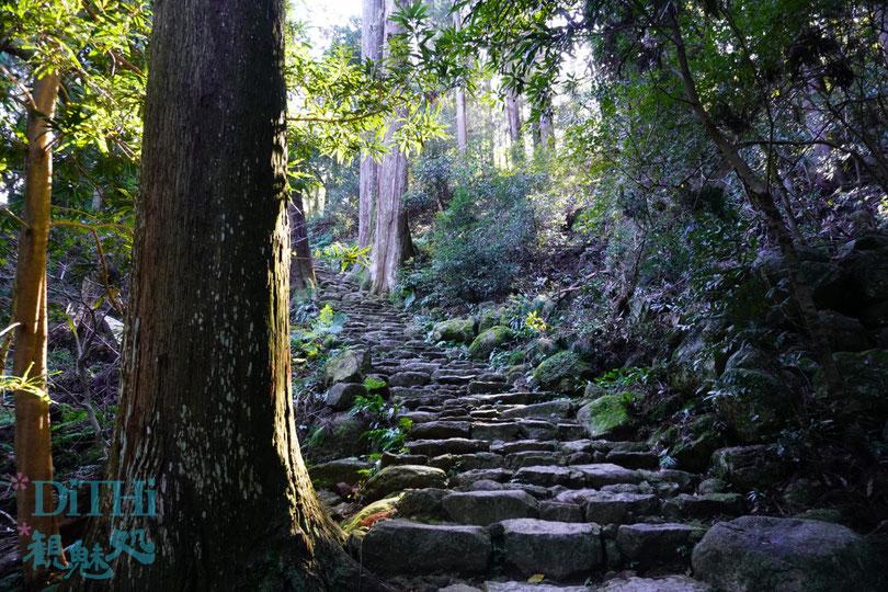 飛瀧神社への道はプチ熊野古道