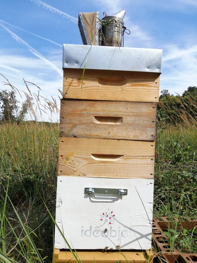 Parrainez votre ou vos ruches !!