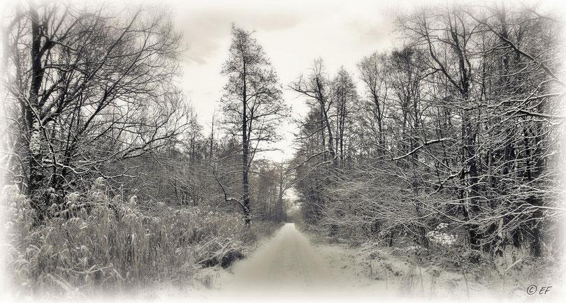 Eine weiße Winterlandschaft (NSG Hohbruch)