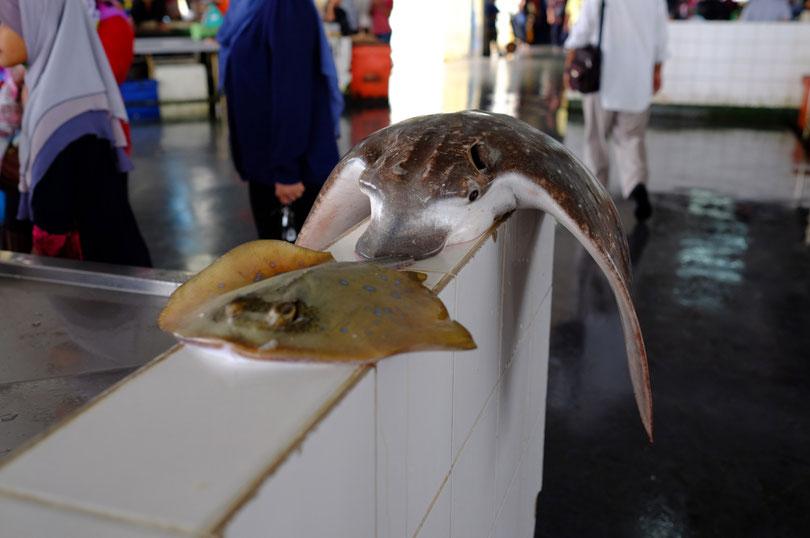 Wahnsinn. Das war krass. Diese majestätischen Tiere tot auf dem morgendlichen Fischmarkt zu sehen. Noch nie haben wir einen Kugelfisch oder diesen unbekannten bunten Rochen gesehen.