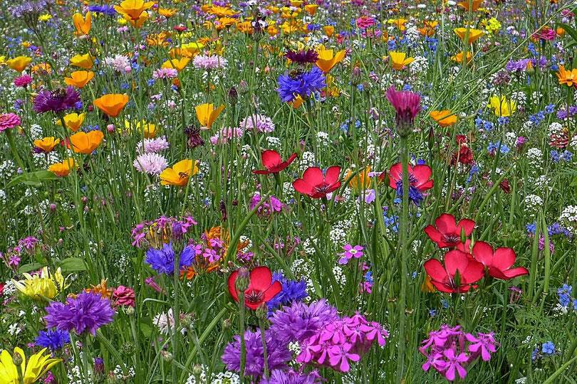 Naturseife Inhaltsstoffe - Blumenwiese