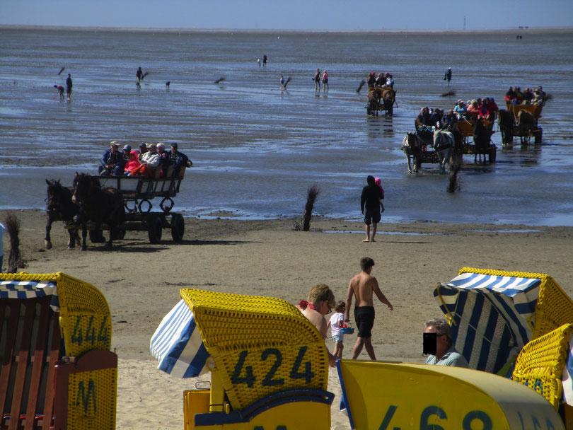 Bio-Urlaub in Cuxhaven, Öko-Ferien in gesunder Ferienwohnung