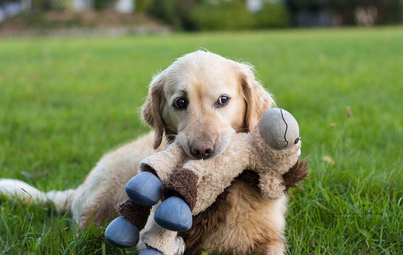 """""""Der Hund ist das einzige Wesen auf Erden, das dich mehr liebt als sich selbst."""""""