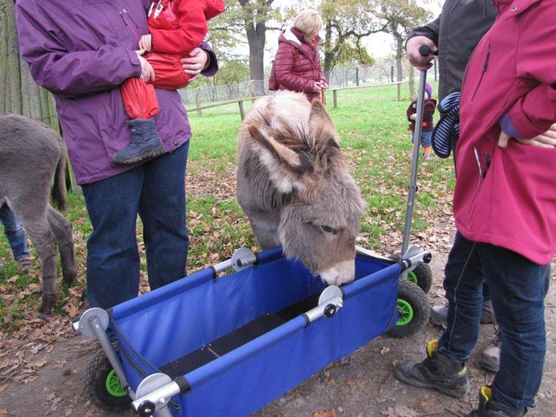 tierische Begeisterung - ulfBo macht alle neugierig