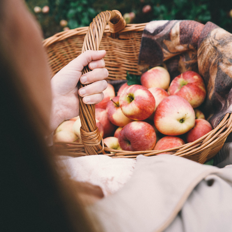 regional und saisonal einkaufen Obst selbst pflücken zweidiereisen