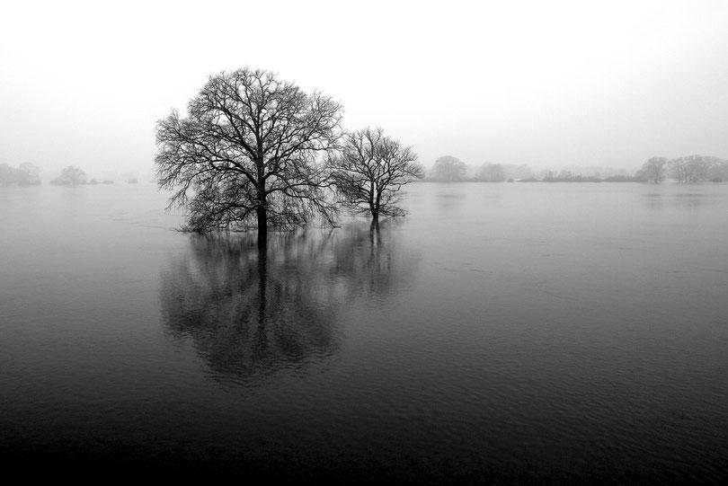 Februar: Elbhochwasser bei Kaltenhof